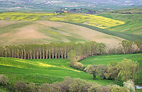 Tuscan Fields in Spring