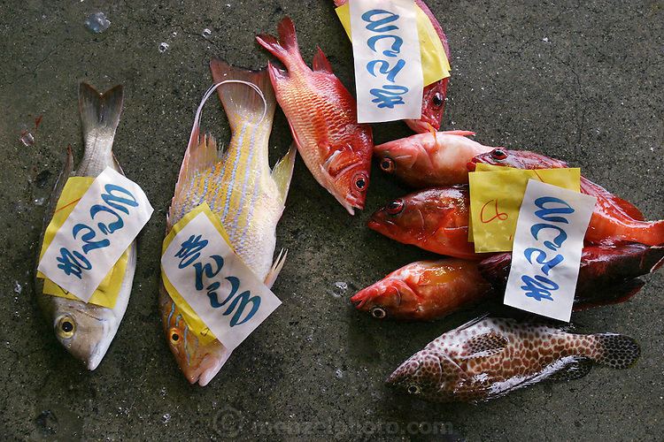 Snapper and other fish caught in the early morning being purchased direct from the dock by restaurants and wholesalers in Ginowan City, Okinawa. (Supporting image from the project Hungry Planet: What the World Eats)