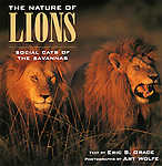The book begins with a quick view of the evolution of lions, a look at their anatomy, and a discussion of basic behavior. A second section covers the lions' world, beginning with mating and the birth of cubs. The interplay of the land, the herbivores (prey), and the lions (predators) fills the rest of the section, with a nice description of the hunt. A final section examines the relationship between lions and humans. The importance of lions' sociality, unique among cats, is woven throughout the text. Wolfe's magnificent photographs bring the book to life and help recommend this nice introduction. <br />