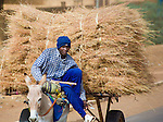 A young man carries hay from the village to sell in Niger's capital, Niamey.