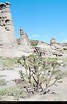 Cane Cholla, Chainlink Cholla Cactus, Cylindropuntia imbricata, Plaza Blanca, Abiquiu, New Mexico