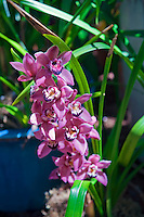 Pink, Purple,  Orchids, Botanical, Gardens, Balboa Park, San Diego, Ca High dynamic range imaging (HDRI or HDR)