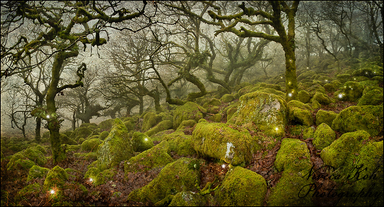 Magical lights in Wistman's Wood, Dartmoor