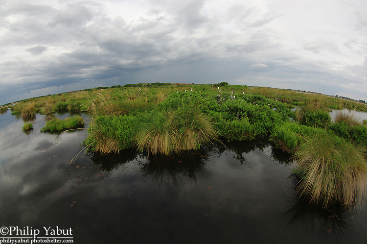 This island in the Okavango Delta's Moremi Reserve contains a large rookery with many different bird species.
