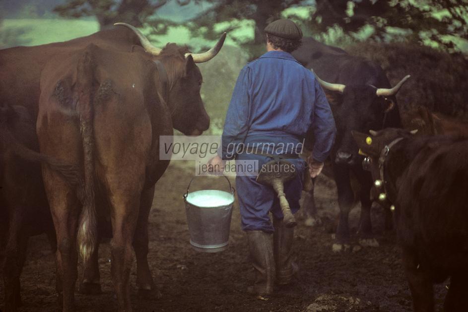 Europe/France/Auvergne/15/Cantal/env de Mandailles&nbsp;: Traite des vaches de race Salers au buron pour la pr&eacute;paration en estive du fromage AOC Cantal [PHOTO D'ARCHIVES // ARCHIVAL IMAGES<br /> FRANCE 1980