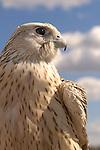 Birds Predator