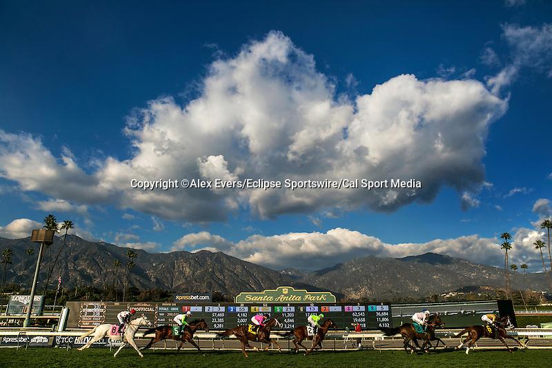 January 31 2015: Scenes from Santa Anita Park in Arcadia CA. Alex Evers/ESW/CSM