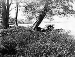 Lakewood NY:  Cow getting a drink of water in Lake Chautauqua - 1901. Photographs taken during a church field trip to Chautauqua Institution in New York (Lake Chautauqua). The Stewart family and friends visited Chautauqua during 1901 to hear Stewart relative, Dr. S.H. Clark  speak at the institute. Alice Brady Stewart chaperoned and Brady Stewart came along to photograph the trip.  The Gallery provides a glimpse of how the privileged and church faithful spent summers at Lake Chautauqua at the turn of the century.