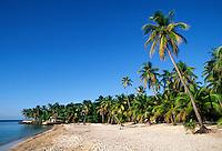WEST END BEACH, a tropical paradise with PALM TREES, BLUE SKY, & CARIBBEAN SEA - BAY ISLANDS, ROATAN, HONDURAS