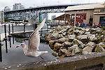 A seagull on near the public market on Granville Island, Vancouver, B.C.