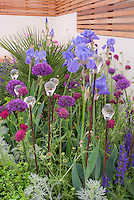 Blue Irises, spiky Allium, Astrantia, Veronica in blue and purple planting combination with glass topped ornaments accessories in the garden, textures and impact with shapes and upright tall flowers