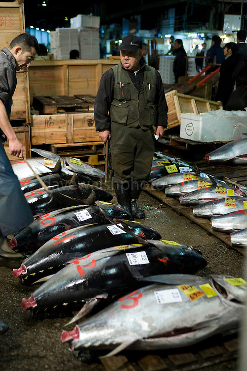 Tuna auction at the tokyo tsukiji fish market dave walsh for Wholesale fish market near me
