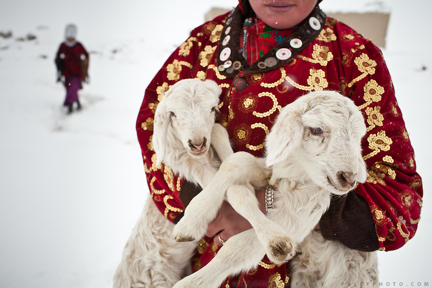 Atom Bubu, a daughter of the late Khan, carries a pair of lambs to be reunited with their mothers at milking time. For the rest of the day, the vulnerable babies are kept warm inside the dung fire heated huts. Outside in the bitter cold they would have no chance of survival..Kyzyl Qorum, campment of the former deceased Khan, Abdul Rashid Khan.