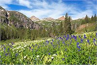 Overlooking the Lower Ice Lake Basin, Colorado wildflowers fill the landscape. In the distance are Fuller Peaks (13,761-ft.), Vermillion Peak (13,894-ft.), Golden Horn (13,780-ft.) and Pilot Knob (13,738-ft.). Nestled in the trees is the Lower Ice Lake. It is an easy hike to this point - perhaps 1600 vertical feet spread out over 2.5 miles - perfect for a morning activity when you are in Silverton or Ouray. The trailhead is only 5 miles down a good dirt road (no 4WD required). you can hike further up to Upper Ice Lake and the spectactular Island Lake, as well, though those are a bit more of a grunt but worth the effort.