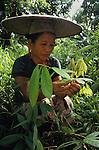 Medicinal Herbs & plants Indigenous Dayak Kelabit Kenyah Sarawk