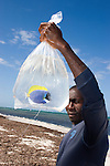 Africa, Kenya, Malindi. Kenyan man holding tropical fish caught in the Indian Ocean to sell to the aquarium trade...