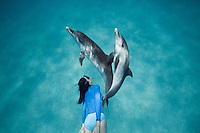 RW4377-D. Atlantic Spotted Dolphins (Stenella frontalis), two interacting with each other above sandy bottom while woman (model released) swim behind them. Bahamas, Atlantic Ocean.<br /> Photo Copyright &copy; Brandon Cole. All rights reserved worldwide.  www.brandoncole.com