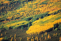 Autumn boreal forest of spruce, birch and aspen trees, Fairbanks, interior, Alaska.