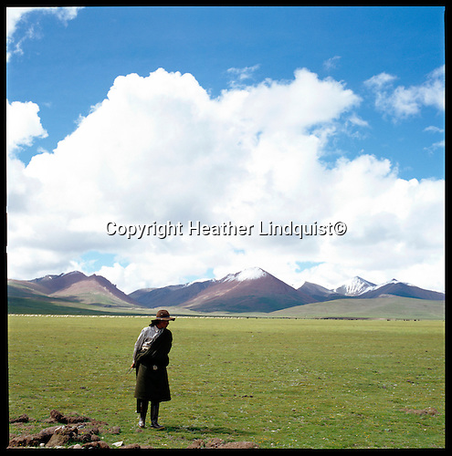 Tibetan nomads tend for sheep  and yaks seen in the distance.