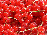 Fresh redcurrant berries close-up