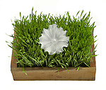 crystal flower in a grass box