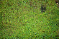 BOGOTÁ-COLOMBIA-14-01-2013. Textura en pasto verde, gramilla./ Green grass texture. Photo: VizzorImage/STR