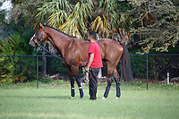 Union Rags enjoying a day off at Palm Meadows.Boynton Beach Florida. 03-01-2012