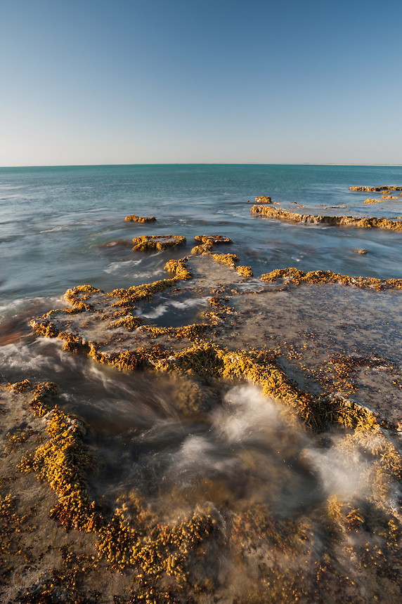 On a clear afternoon, the colour of Guichen Bay is nearly indescribable. Waves pour into the sheltered waters at Hooper's Beach, and I explore with my camera the reefs I explored as a child. It is as magical now as it was then.
