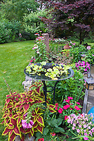 Colorful backyard garden with birdbath water garden, annuals and mixed perennials, lawn grass, Japanese maple tree, ornaments, impatiens, coleus, echinacea, heuchera, blue gazing ball. Flowers and foliage plants intermixed with trees and shrubs.