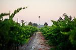 Vineyards of Gundlach-Bundschu Winery on Denmark St., in Sonoma, Ca., on Saturday, July 17, 2010.