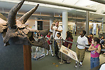 Berkeley CA Second grade teacher informing students at UC Berkeley Paleontology Museum about Triceratops model on school field trip