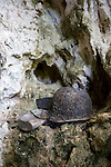 """Photo shows a helmet and other artifacts used by Imperial Japanese Army soldiers in a cave in """"Harakiri Gulch"""" in Saipan on 22 February 2011. .Photographer: Robert Gilhooly"""