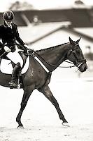 161019 Equestrian - Solway College Inter-School Dressage