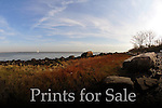 Prints for Sale 2012