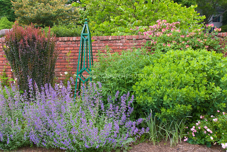 Landscaping With Honeysuckle : Garden obelisk brick wall berberis lonicera plant flower stock photography gardenphotos