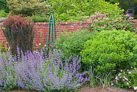 Garden scene of Nepeta, Berberis thunbergii barberry, Obelisk, Baptisia, Lonicera honeysuckle vine, roses, etc in summer