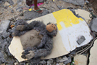 Philippines. Province Eastern Samar. Hernani. 95 % of the town was destroyed by typhoon Haiyan's winds and storm surge. A stuffed gorilla is drying in the sun among rubbles of a house dammaged by typhoon Haiyan. A child's foot with flip-flop shoes. Typhoon Haiyan, known as Typhoon Yolanda in the Philippines, was an exceptionally powerful tropical cyclone that devastated the Philippines. Haiyan is also the strongest storm recorded at landfall in terms of wind speed. Typhoon Haiyan's casualties and destructions occured during a powerful storm surge, an offshore rise of water associated with a low pressure weather system. Storm surges are caused primarily by high winds pushing on the ocean's surface. The wind causes the water to pile up higher than the ordinary sea level. A stuffed toy is a toy sewn from a textile, and stuffed with a soft material. They are also known as plush toys, plushies, or stuffed animals and soft toys or cuddly toys. 26.11.13 © 2013 Didier Ruef