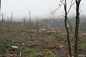 View of forest  after large forestry cut on a  wet foggy  fall afternoon