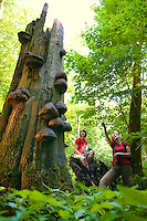 Thuriningia, East Germany, June 2010. Hainich National Park is a former Russian and East German Army military area. Because of the restricted access for the past 100 years the forest flora and fauna was able to grow almost uninterupted Giving plants and wildlife to chance to create a unique National Park in Europe. Hainich NP is nominated to become a UNESCO World Heritage site. The former German Democratic Republic of East Germany is a haven of wild nature, with unspoiled and untouched old growth forests. Hiking and biking trails are everywhere. Photo by Frits Meyst/Adventure4ever.com