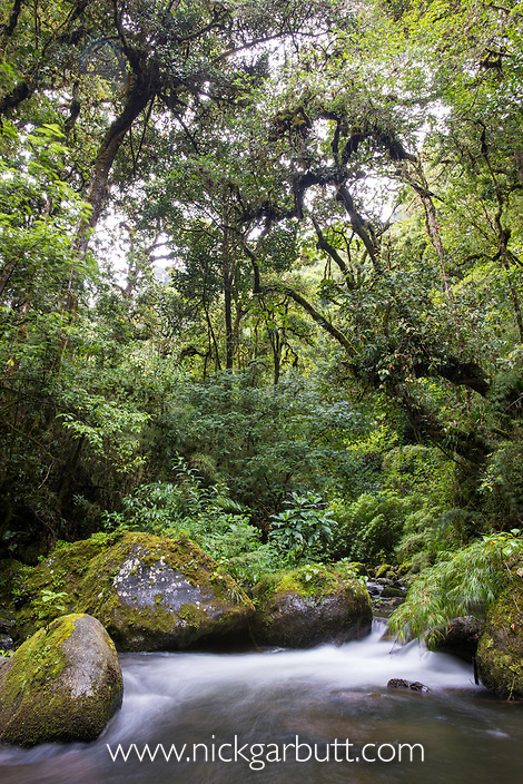 River and montane rainforest. Savegre Valley, Costa Rica.