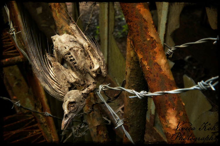 Dead bird caught on barbed wire
