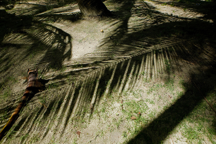 Shadows of palm trees and leaves on Isla Pelikano, San Blas Islands, Kuna Yala, Panama