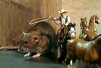 Rodent roundup: Zoe the pet rat is lassoed by a cowboy on a Schleich model horse