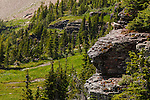 A hoary marmot warms itself on the side of a cliff face overlooking Hidden Lake at the Hidden Lake Overlook in Logan Pass, Glacier National Park, Montana.