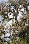 Trees in Myakka River State Park in Florida