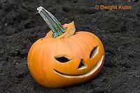 DC08-581z  Jack-o-Lantern Pumpkin placed in garden after Halloween