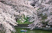 Ohanami cherry blossom viewing time