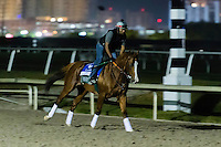 HALLANDALE, FL - JANUARY 27: California Chrome, with exercise rider Dihigi Gladney gallops at Gulfstream Park Race Course on January 27, 2017 in Hallandale Beach, Florida. (Photo by Douglas DeFelice/Eclipse Sportswire/Getty Images)