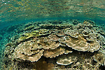 Healthy coral reef in the shallows.