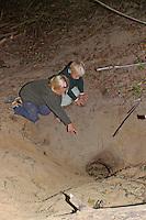 Kinder am Bau, Erdhöhle von Dachs mit Höhleneingang und Rutschbahn in den Bau, Dachsbau, Europäischer Dachs, Meles meles, Badger, Blaireau